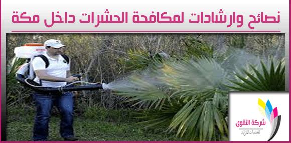 افضل شركة مكافحة حشرات بمدينة مكة
